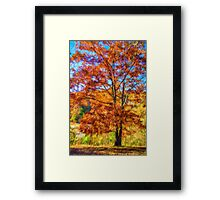 Splendor Of Autumn Framed Print