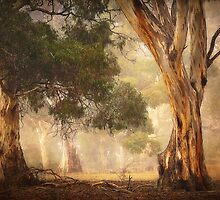 Gum Trees - Anakie by Hans Kawitzki