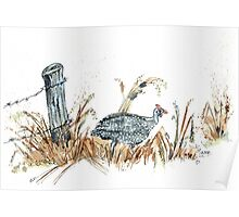 Guineas are winged wonders! Poster
