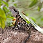 Eastern Water Dragon  by Robert Elliott