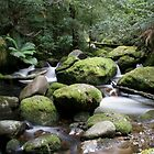 Ferny River by Mark Jones