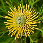 Yellow Cone Flower by Penny Smith