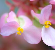 Floral Butterflies - Begonia by Renee Hubbard Fine Art Photography
