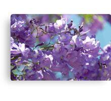Spring Jacaranda Blossoms Canvas Print