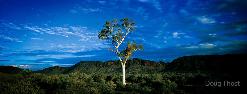 Lone Ghostgum, Macdonnell Ranges by Doug Thost