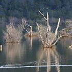 Comorants At Collins Lake by Laura Puglia