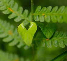 I wear my heart on my leaf by Clare Colins