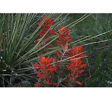 Yuca and Indian Paint Brush Photographic Print
