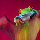 Frogs and Reptiles by Angi Wallace by Angi Wallace