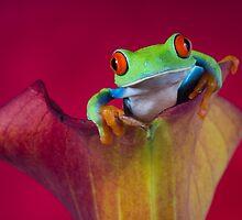 Amphibians by Angi Wallace by Angi Wallace