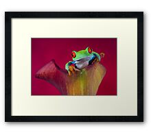 The little explorer Framed Print