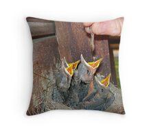 Feeding Baby Robins Throw Pillow