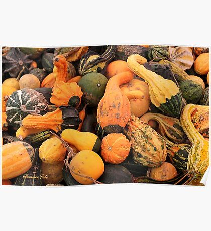 Gourds ~ a Bountiful Harvest Poster