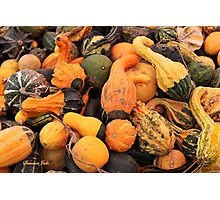 Gourds ~ a Bountiful Harvest Photographic Print