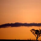 Tree, fence, cloud &amp; sunset by FuriousEnnui