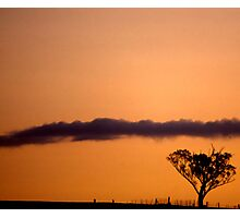 Tree, fence, cloud & sunset Photographic Print