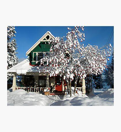 Snow on Mountain Ash Berries Photographic Print