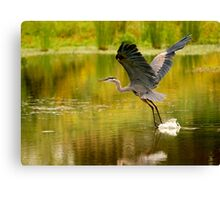 Heron Liftoff Canvas Print