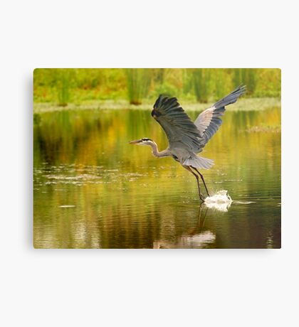 Heron Liftoff Metal Print