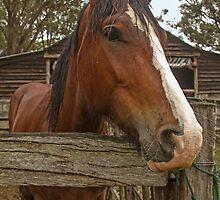 Brown Horse. by GW-FotoWerx