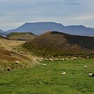 Sheep Grazing amid Flat Topped Hills, Iceland by Gerda Grice