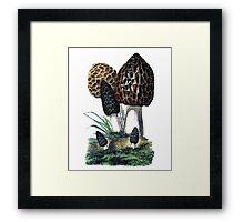 antique typographic vintage mushrooms toadstools Framed Print