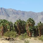 Together: Palms, Desert and Mountains by Heather Friedman