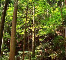 Cedar Grove, Mt. Kurama by Brita Lee