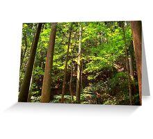 Cedar Grove, Mt. Kurama Greeting Card