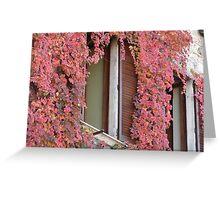 Flowers on the wall in Tuscany, Italy Greeting Card