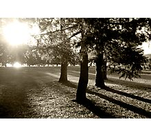 Trees at sun down  Photographic Print