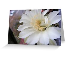 White cactus flower Greeting Card