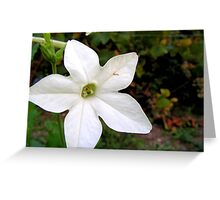 Small white flower Greeting Card