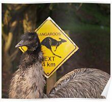 Kangaroos Next 14 km Poster