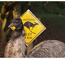 Kangaroos Next 14 km Photographic Print