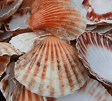 Sea Shells by Mark Wilson