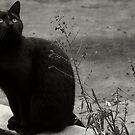 Black cat... by Louise LeGresley