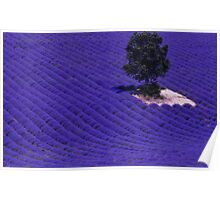 Lavender Fields of Provence Poster