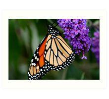 Butterfly on it's own bush Art Print