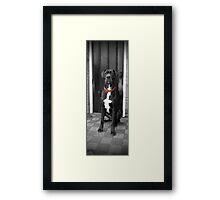Red Collar Framed Print