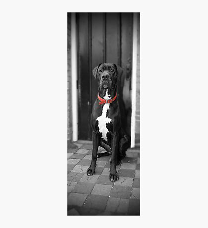 Red Collar Photographic Print