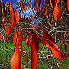 Autumn Leaves by John Thurgood
