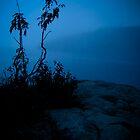 Solitude by Sherstin Schwartz