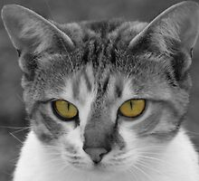 Cats eyes by Wazi