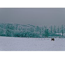 Winter's day Photographic Print