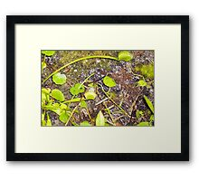 Watch out...Its a Trap! Framed Print