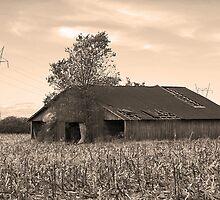 in the cornfield by budrfli