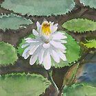 Lotus in watercolour by suresh pethe