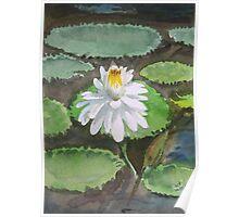 Lotus in watercolour Poster