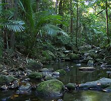 Mossman Gorge by Peter Walters